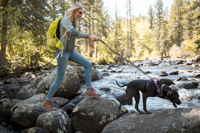 Hiking a dog-friendly trail outside of Rocky Mountain National Park